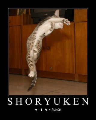 cat-ryuken.jpg