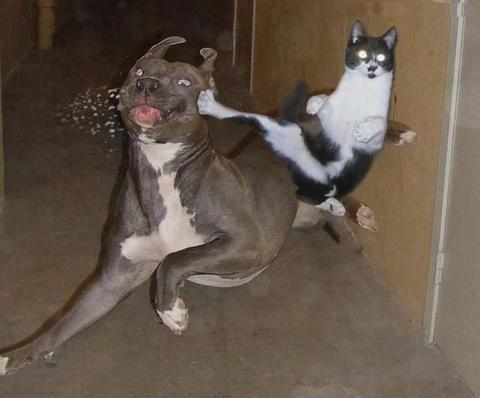 dog-cat-punch.jpg