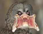 predator-owl.jpg